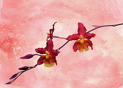 Cattleya Spray On Grunge Art Print by Rosalie Scanlon