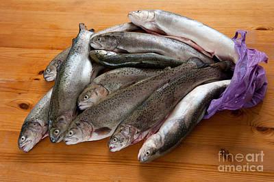 Carcass Photograph - Caught Fresh Trouts Fish Carcass by Arletta Cwalina