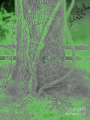 Photograph - Caught In The Spiders Web by D Hackett