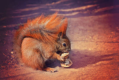 Squirrel Wall Art - Photograph - Caught Red Handed by Carol Japp