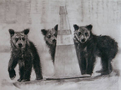 Yellowstone Drawing - Caution Bears by Susie Gordon