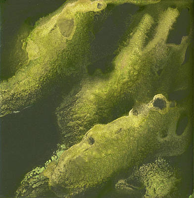 Painting - Cava Green Seaweed by Pat Saunders-White