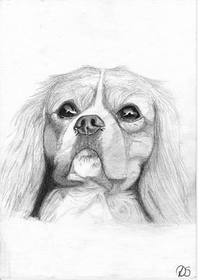 Puppy Drawing - Cavalier King Charles Spaniel 2 by David Smith