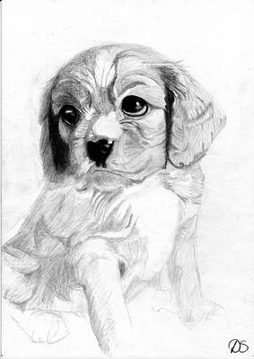 Cavalier Drawing - Cavalier King Charles Spaniel Puppy 2 by David Smith