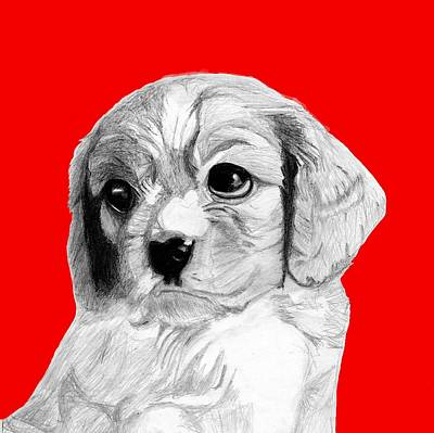 Spaniel Drawing - Cavalier King Charles Spaniel Puppy In Red by David Smith