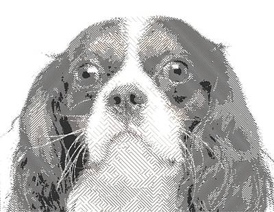 Drawing - Cavalier King Charles Spaniel by Samuel Majcen