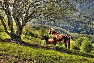 Photograph - Cavalla Plains Horses - Cavalli Al Pian Della Cavalla by Enrico Pelos