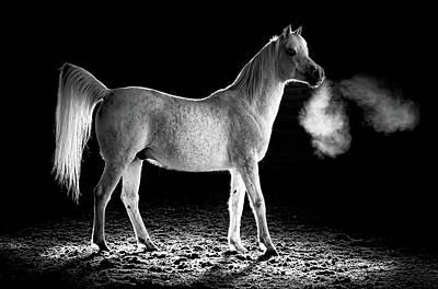 Photograph - Cavalli Majesty by Athena Mckinzie