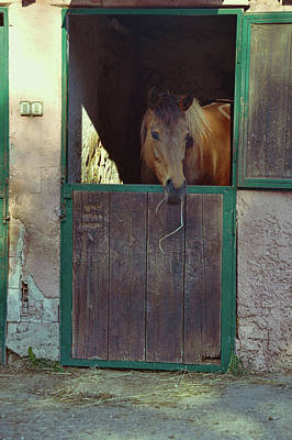 Photograph - Cavallo Di Baia by JAMART Photography