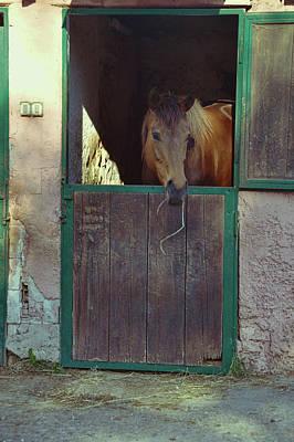 Photograph - Cavallo Di Baia by JAMART Photography