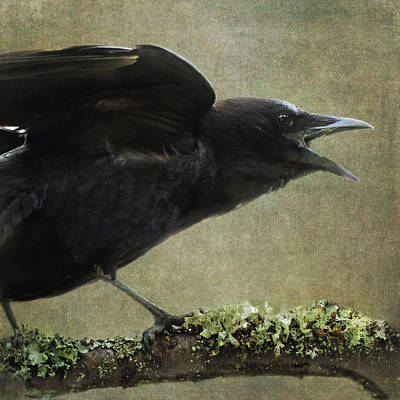 Photograph - Caw by Sally Banfill