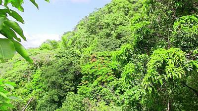 Photograph - Cayey, Siempre Verde. by Walter Rivera Santos