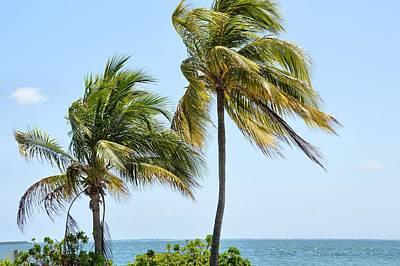 Photograph - Cayman Breezes by JAMART Photography