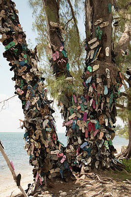 Photograph - Cayman Shoe Tree by Teresa Wilson