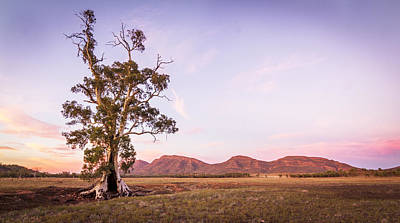 Photograph - Cazneaux Tree by Pascal Mercay
