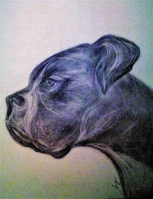 Boxer Drawing - CC by Magda Popovici