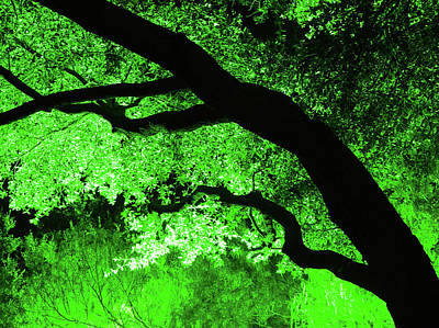 Cc11 Tree At Night Art Print by James D Waller