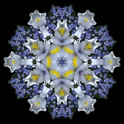 Ceanothus Iris Medley 1 Art Print