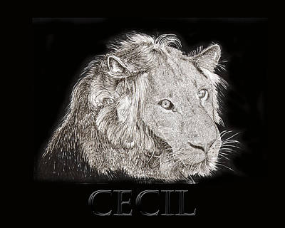 Animals Drawings - Cecil African Lion R I P  by Jack Pumphrey