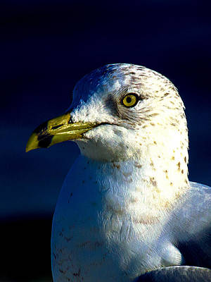 Photograph - Cedar Gull Iv by Jeff Kurtz