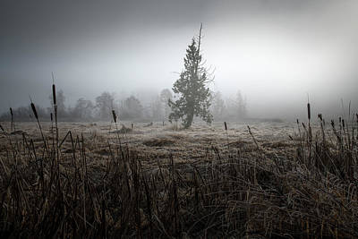 Photograph - Cedar And Bull Rushes by Adam Gibbs