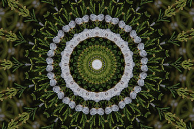 Photograph - Cedar Berries Kaleidoscope by Robyn Stacey