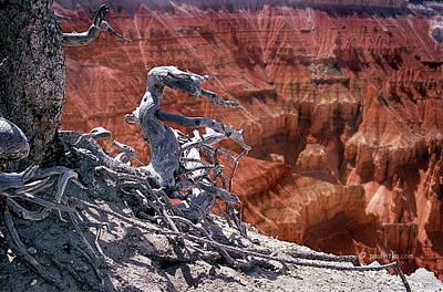 Photograph - Cedar Breaks National Monument, Utah.... by Paul Vitko