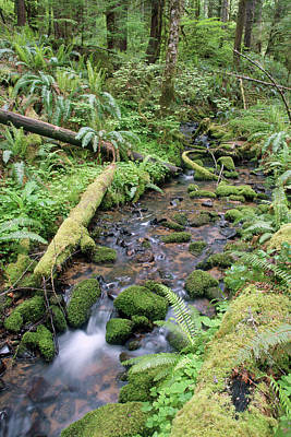 Photograph - Cedar Creek Near Cottage Grove Lake #2 by Ben Upham III