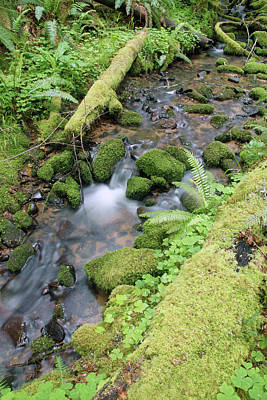 Photograph - Cedar Creek Near Cottage Grove Lake #3 by Ben Upham III