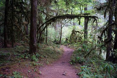 Photograph - Cedar Creek Trail #1 by Ben Upham III