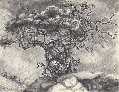 Drawing - Cedar Dancing On The Eastern Peak by Dawn Senior-Trask