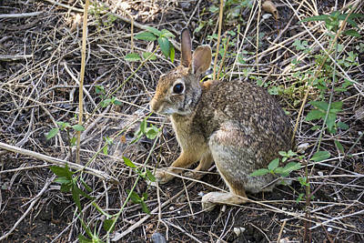 Photograph - Cedar Hill Bunny by Ricky Dean