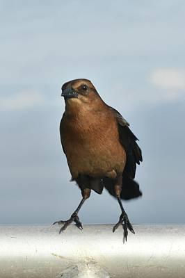 Photograph - Cedar Key Bird by Helen Haw