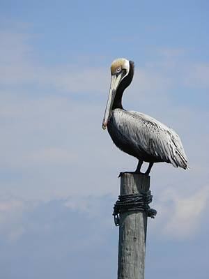 Cedar Key Pelican 2 Original by Warren Thompson