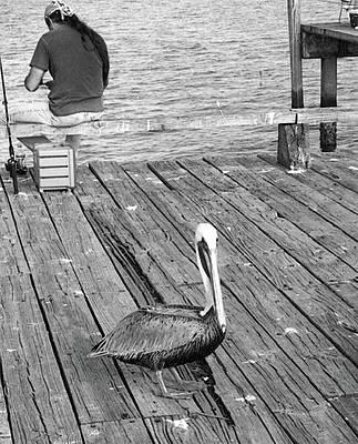 Photograph - Cedar Key Pelican by Andy Jeter