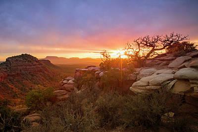 Photograph - Cedar Mesa Sunset by Johnny Adolphson