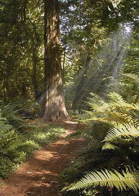 Photograph - Cedar Path by Sharon Foster