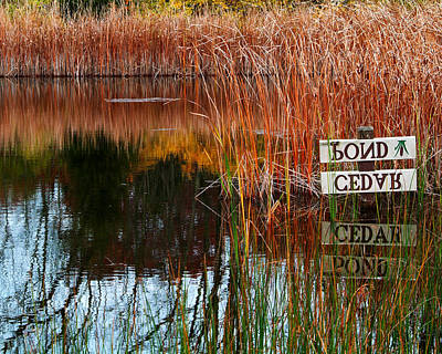 Cedar Pond Art Print