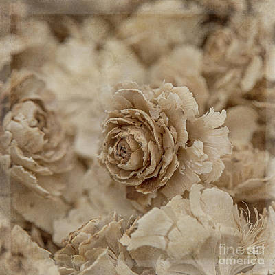 Photograph - Cedar Rose Square - 3347 by Teresa Wilson