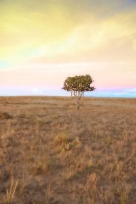 Photograph - Cedar Tree At Sunset by Amanda Smith
