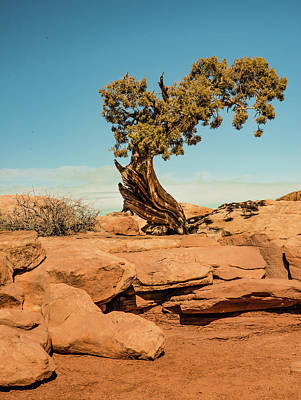 Photograph - Cedar Tree Near Moab by Harry Strharsky