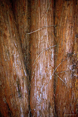 Photograph - Cedar Tree Trunks by LeeAnn McLaneGoetz McLaneGoetzStudioLLCcom