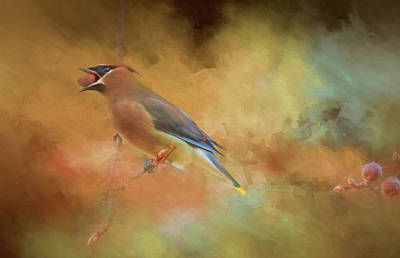 Photograph - Cedar Waxwing 2 by Donna Kennedy