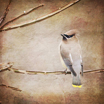 Digital Art - Cedar Waxwing Painting Effect by Heidi Hermes