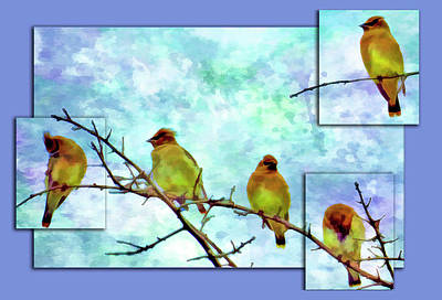 Cedar Waxing Photograph - Cedar Waxwing Party by Geraldine Scull