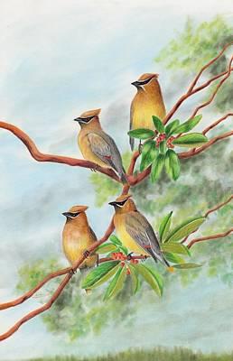 Cedar Waxwings Painting - Cedar Waxwing Quartet In Madrones by Cristolin O