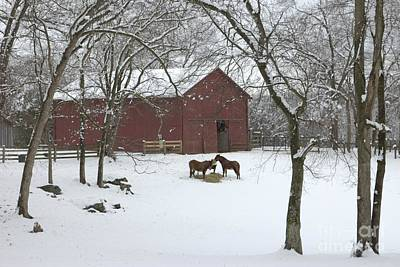 Donkey Photograph - Cedarock Park In The Snow by Benanne Stiens