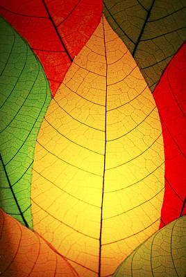 Photograph - Celebrate Fall by Marilyn Hunt