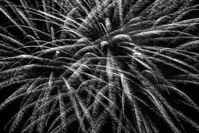 Photograph - Celebrate by Stewart Helberg