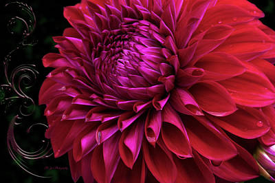 Photograph - Celebrating Dahlias by Jeanette C Landstrom